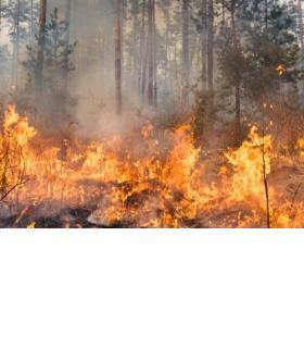 Tous les feux en plein air sont interdits sur l'ensemble du canton depuis le 26 avril. GETTY/GILITUKHA