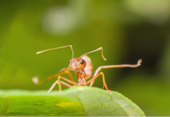 Les curieux pourront découvrir notamment la plus grande collection de fourmis au monde. GETTY IMAGES/ARTHITO
